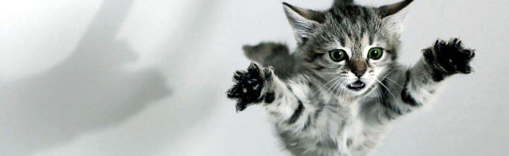 cats nine lives