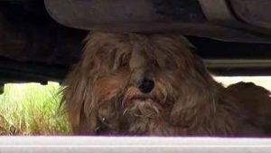 Benji Under Car