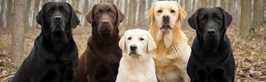 Dog personalities