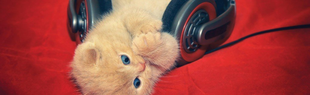 benefits of music for cats