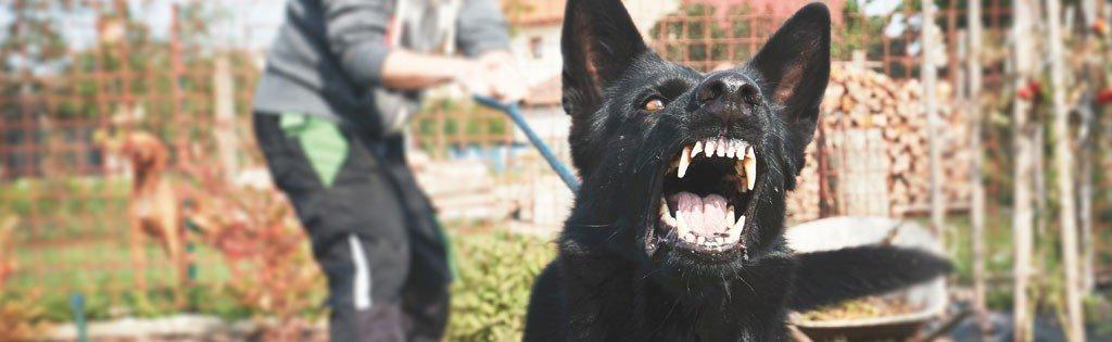 U.S. Postal Service Releases Annual Dog Attack City Rank