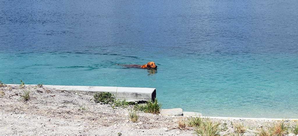 Performance Pups Dock Jumping Lake 4