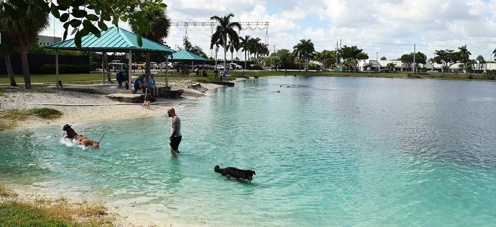 Performance Pups Dock Jumping Lake 5
