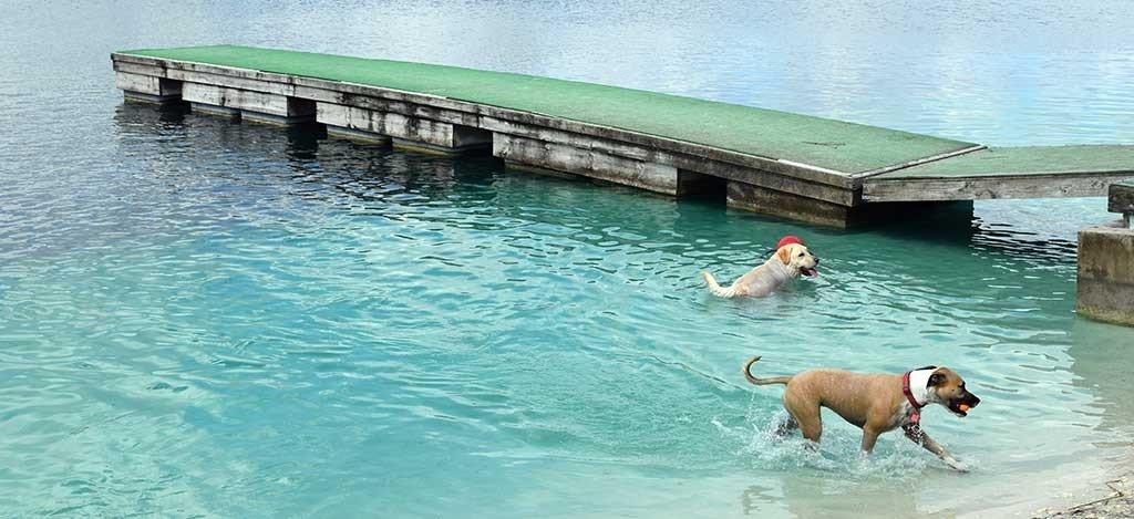 Performance Pups Dock Jumping Lake 6