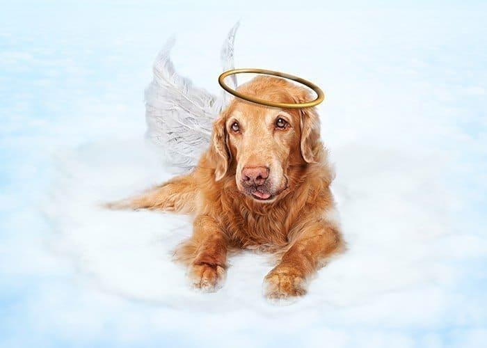 Pet Grief Icon