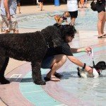 Waggin at the Waterpark 21