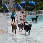 Waggin at the Waterpark 26