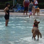 Waggin at the Waterpark 31