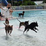 Waggin at the Waterpark 32