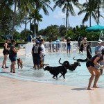Waggin' at the Waterpark