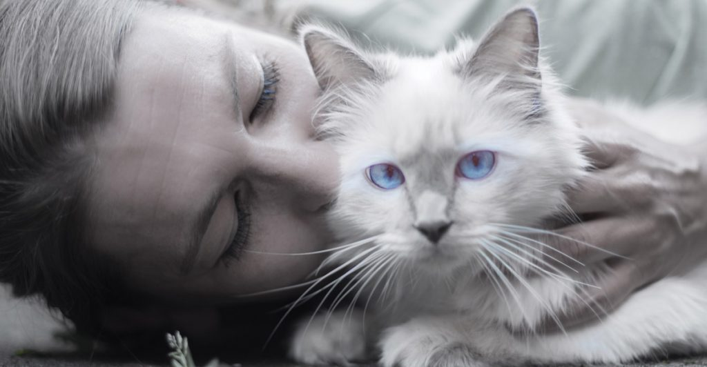 Five human feelings that get in the way of optimal health or wellness in our pets