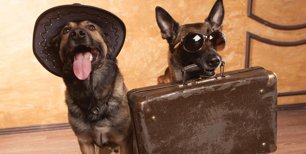Need dog boarding