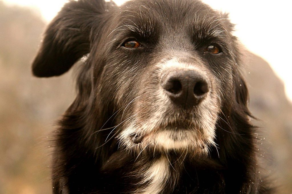 Old wise dog I am your dog Article