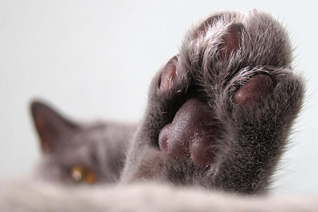 Why You Should Never Declaw Article