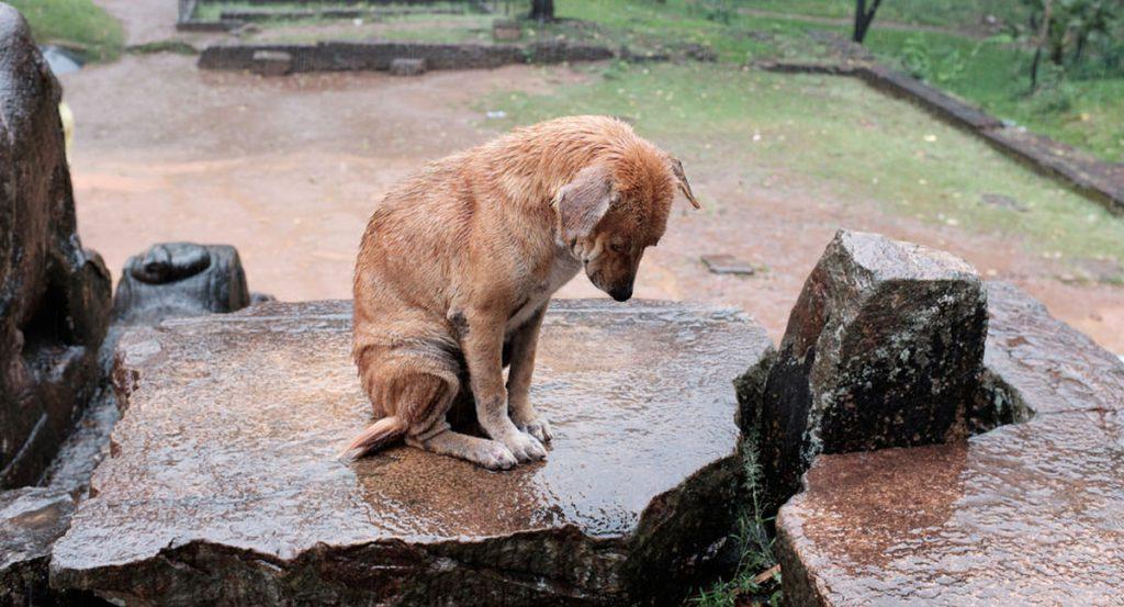 Dog sitting on rock in rain