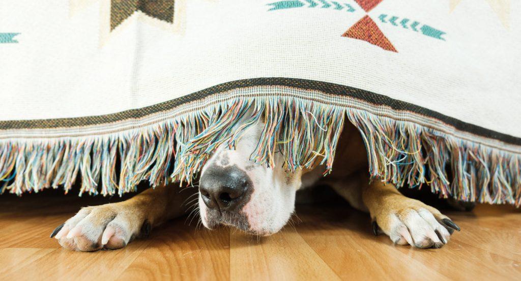 thunderstorm fear in dogs