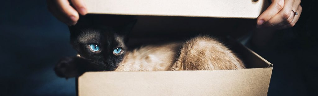 cat hiding in box being let out skinny